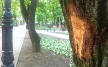 Arbore marcat pentru taiere